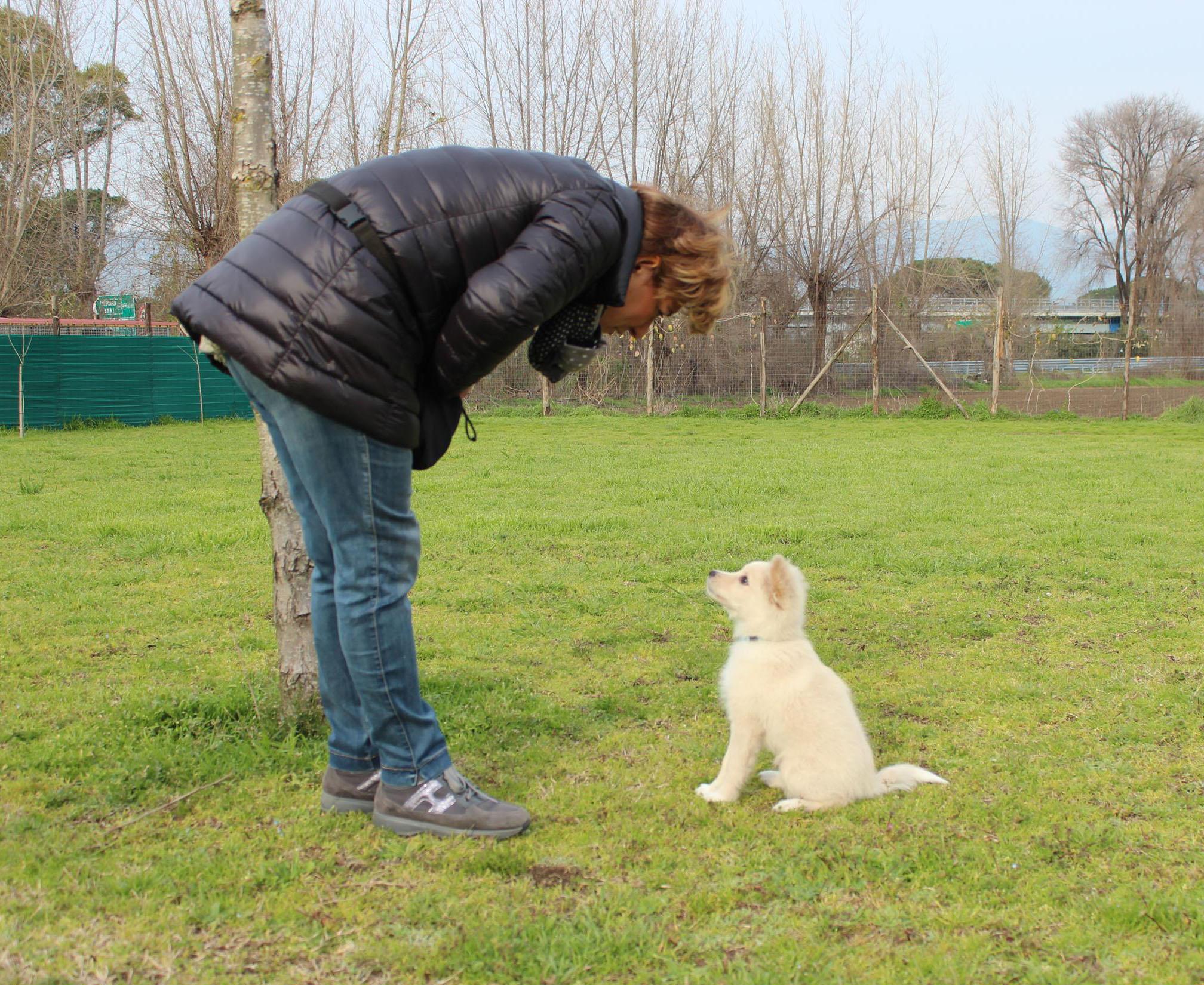 Corso educazione cane base centro cinofilo asd vulcane for Educazione cane